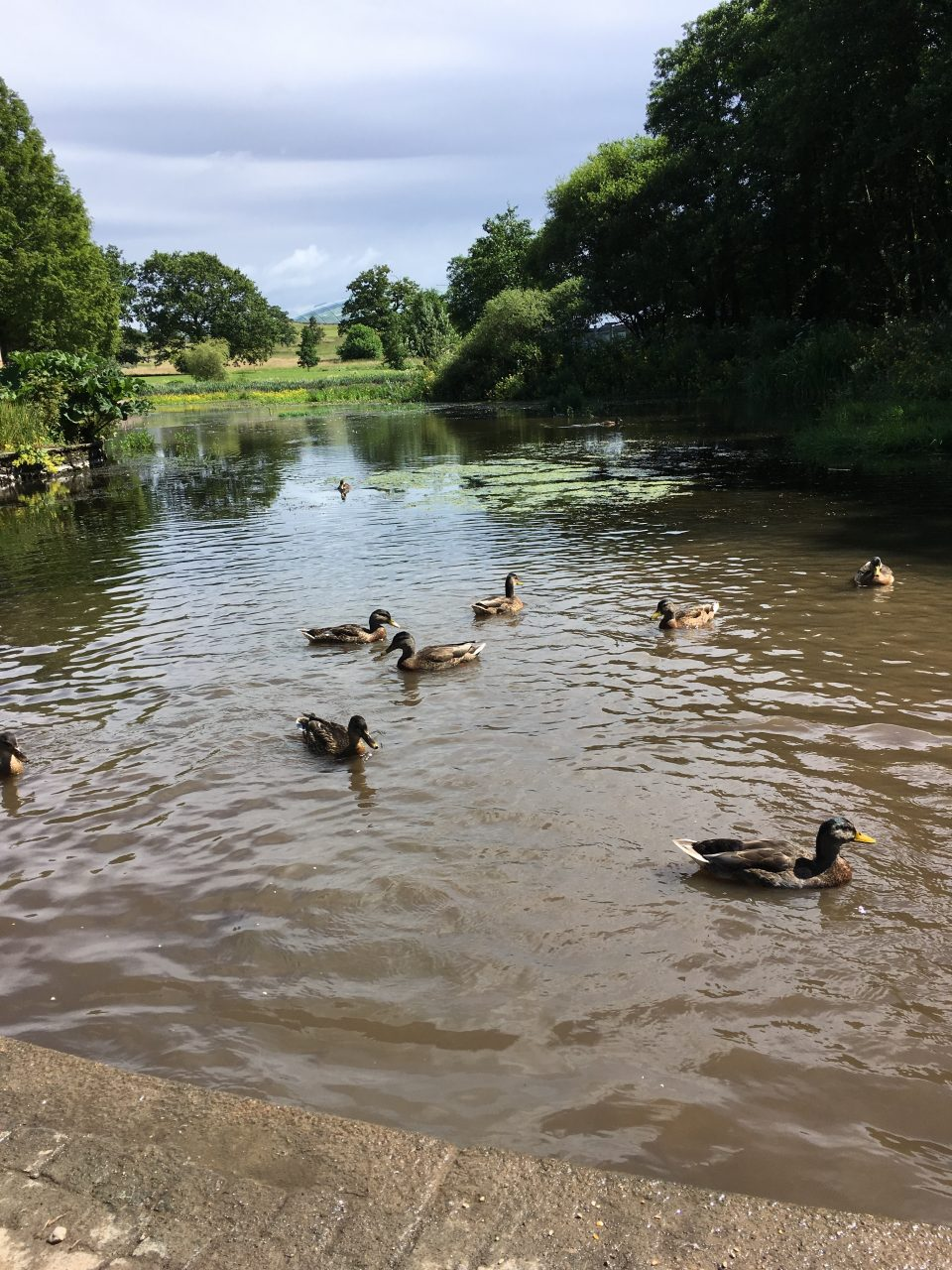 duck pond at the entrance of the garden