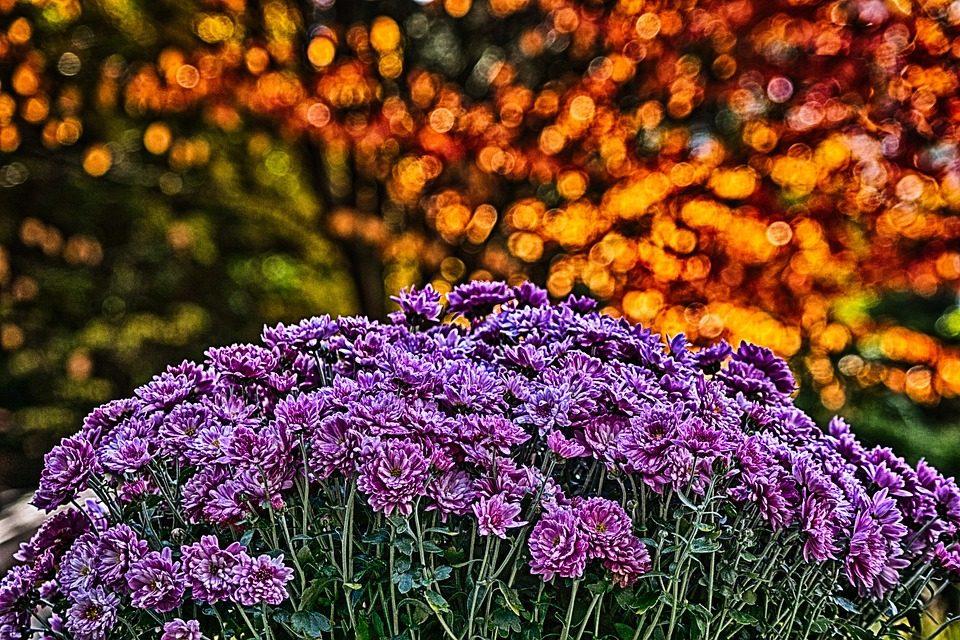 large purple flowers