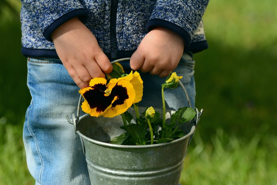 child holding a metal pot with pansy's inside