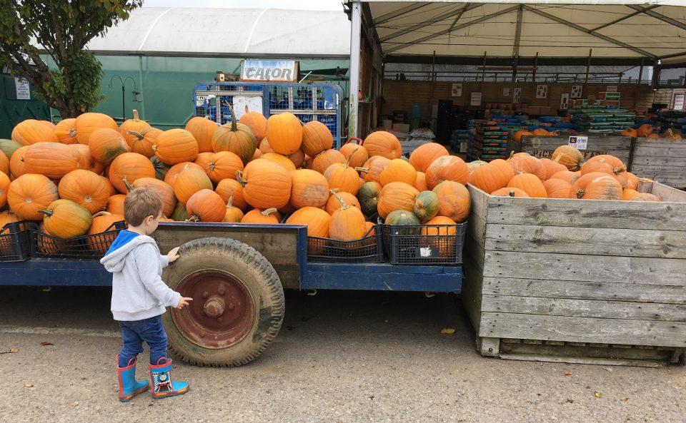 child next to pumpkins in a trailer