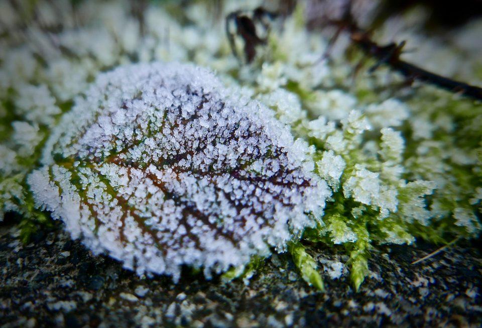 frozen lead- winter garden