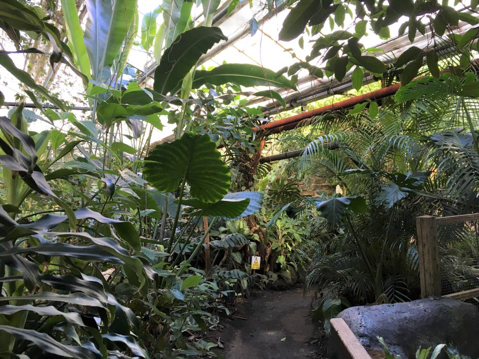 inside the rainforest, pathways and plants
