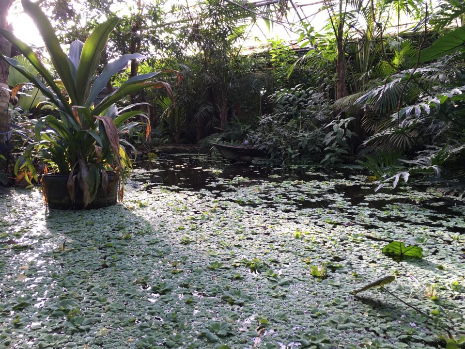 pond inside the rainforest