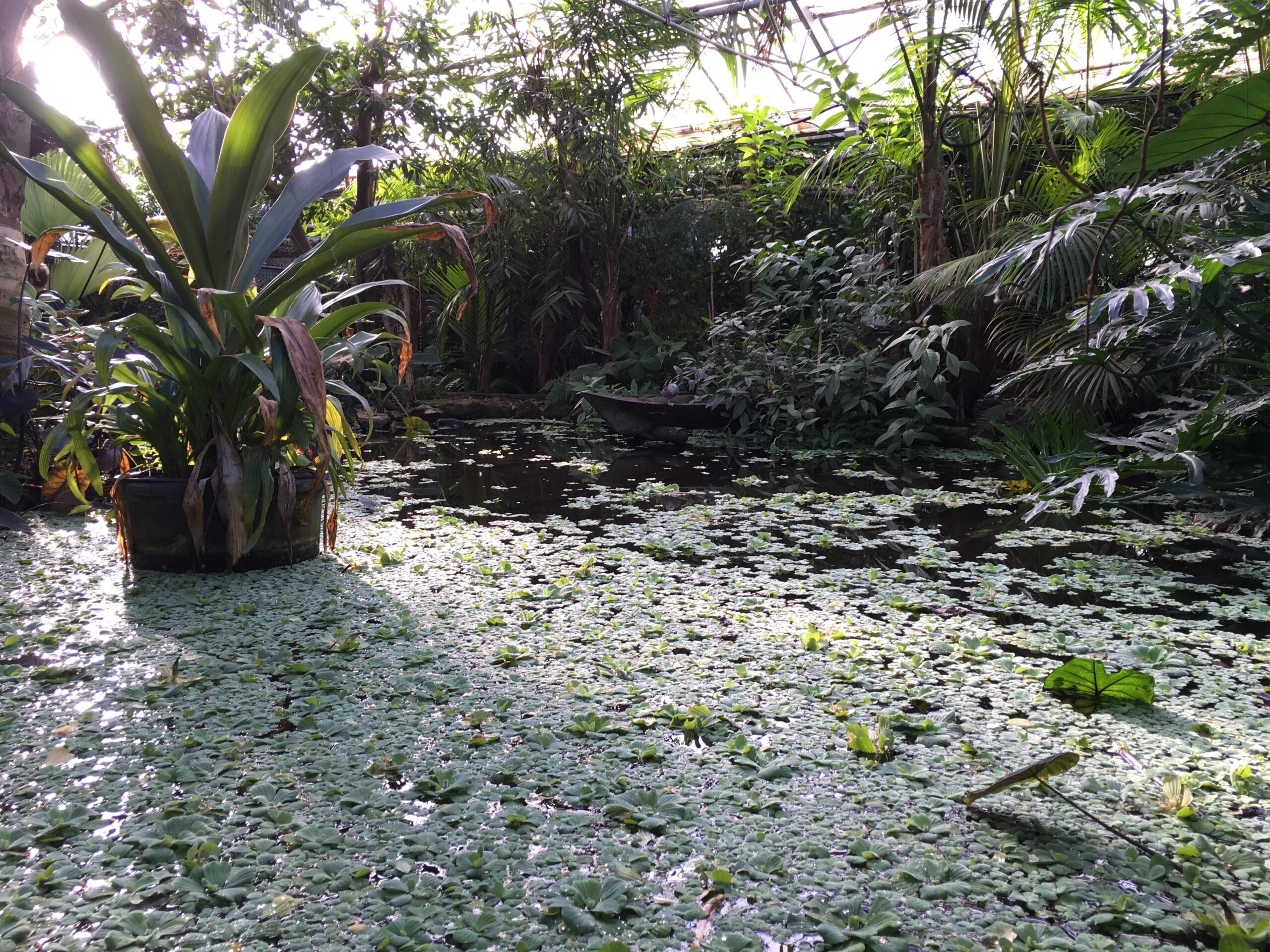 pond at the living rainforest