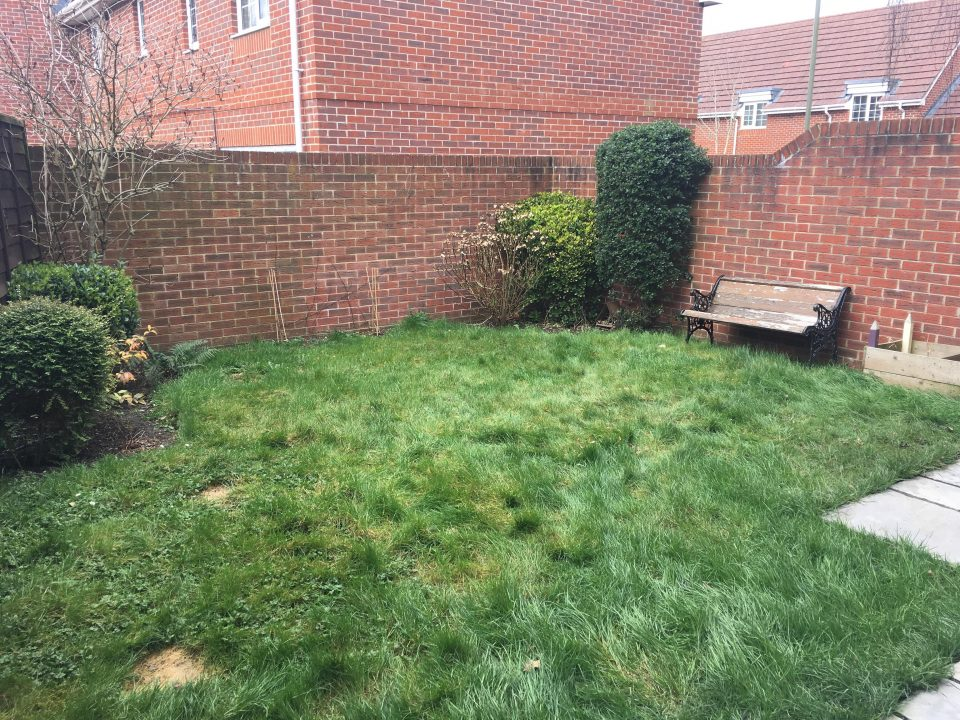 garden with long grass before the lawnmower cut it