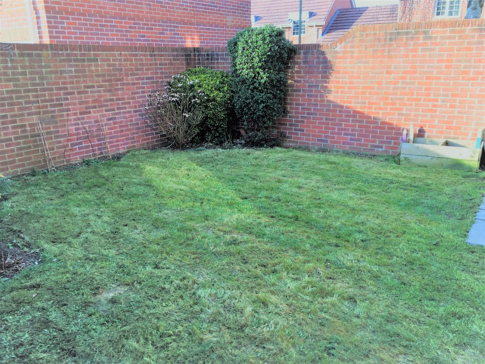 garden after the lawn was cut