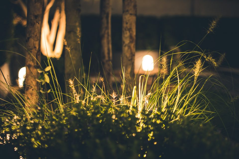 garden at night with lights