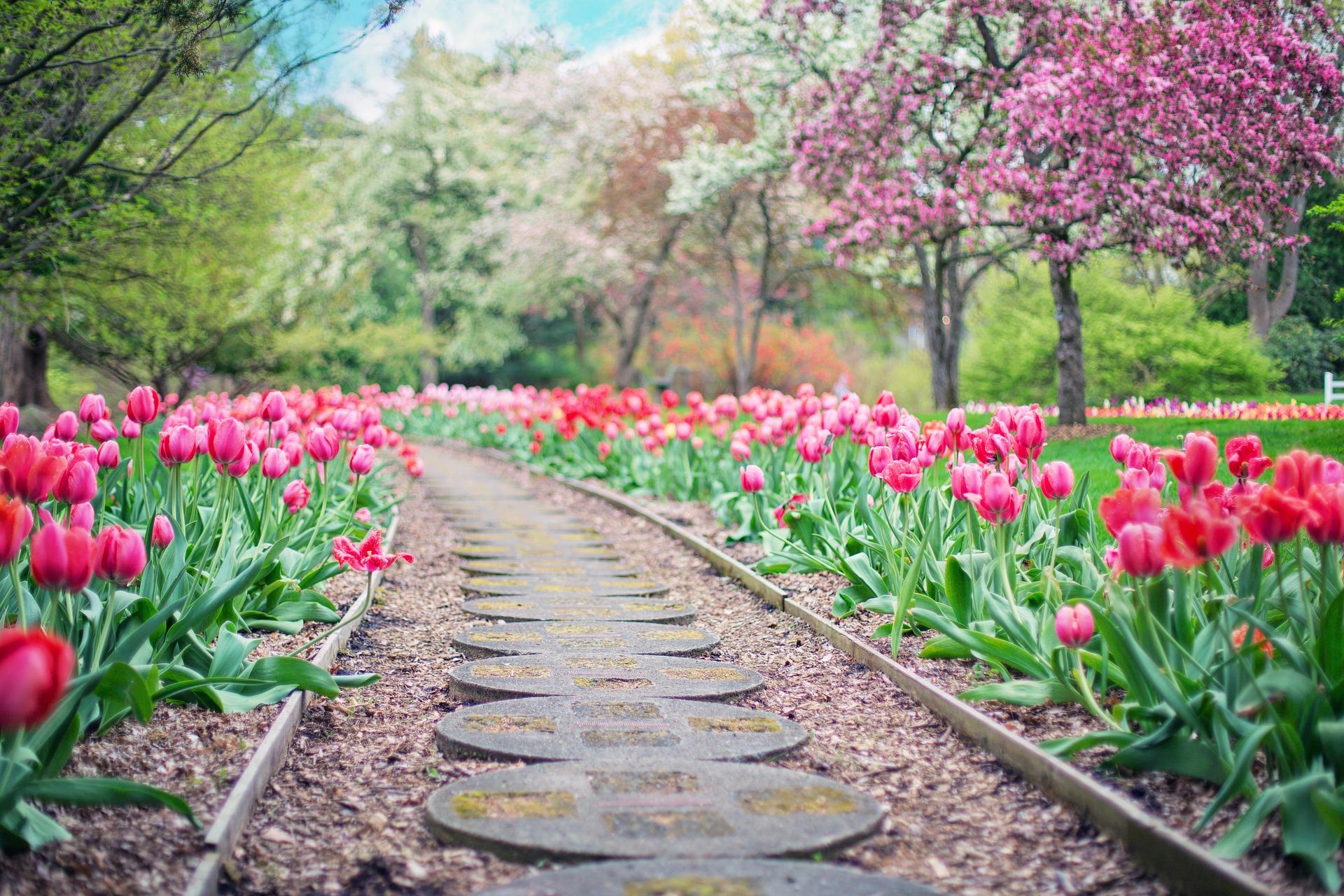 garden with a path