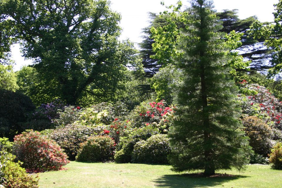 creating an attractive garden space with everygreen trees