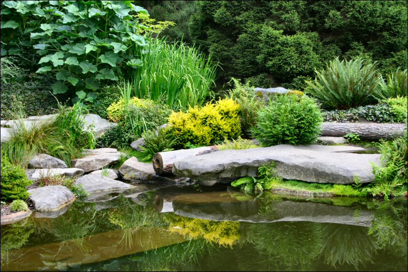 creating an attractive garden space with a pond
