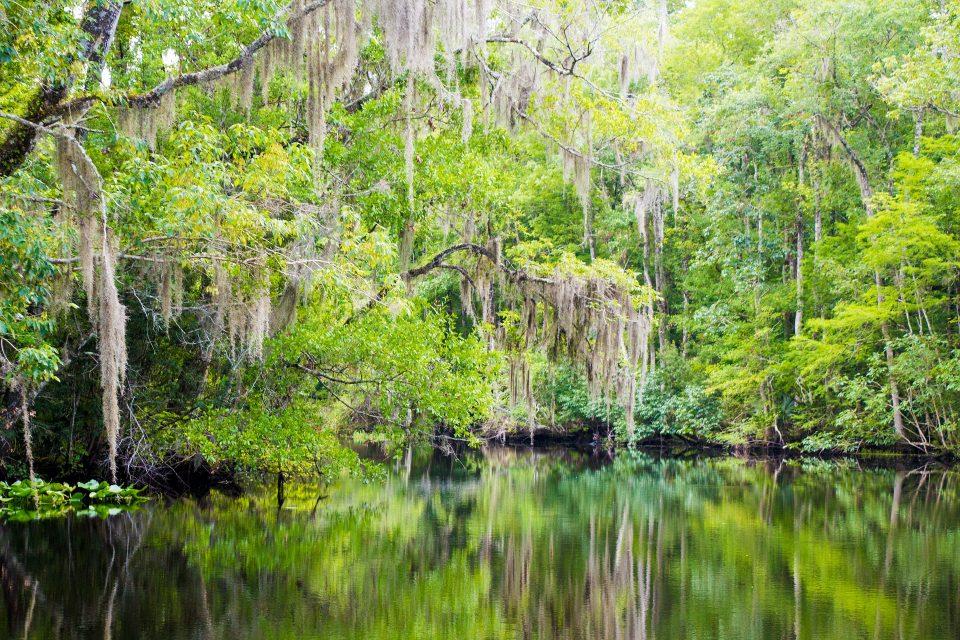 creek in Florida