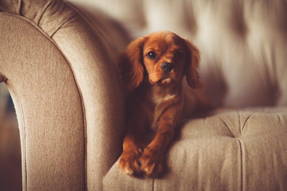 puppy sat on a sofa
