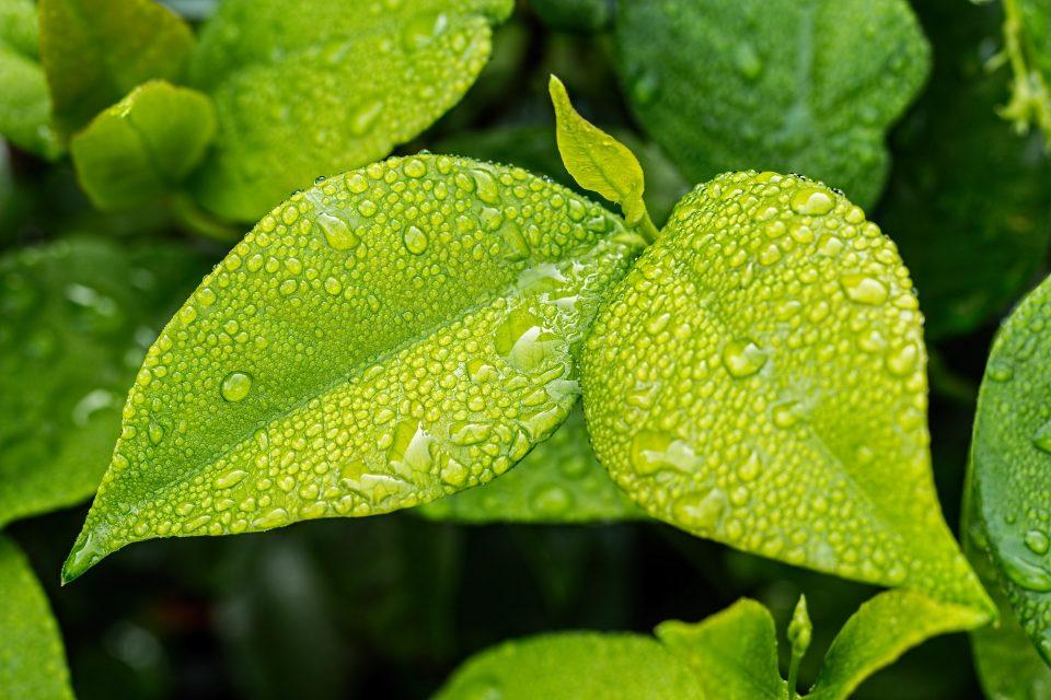 green leaf seen in an eco-garden
