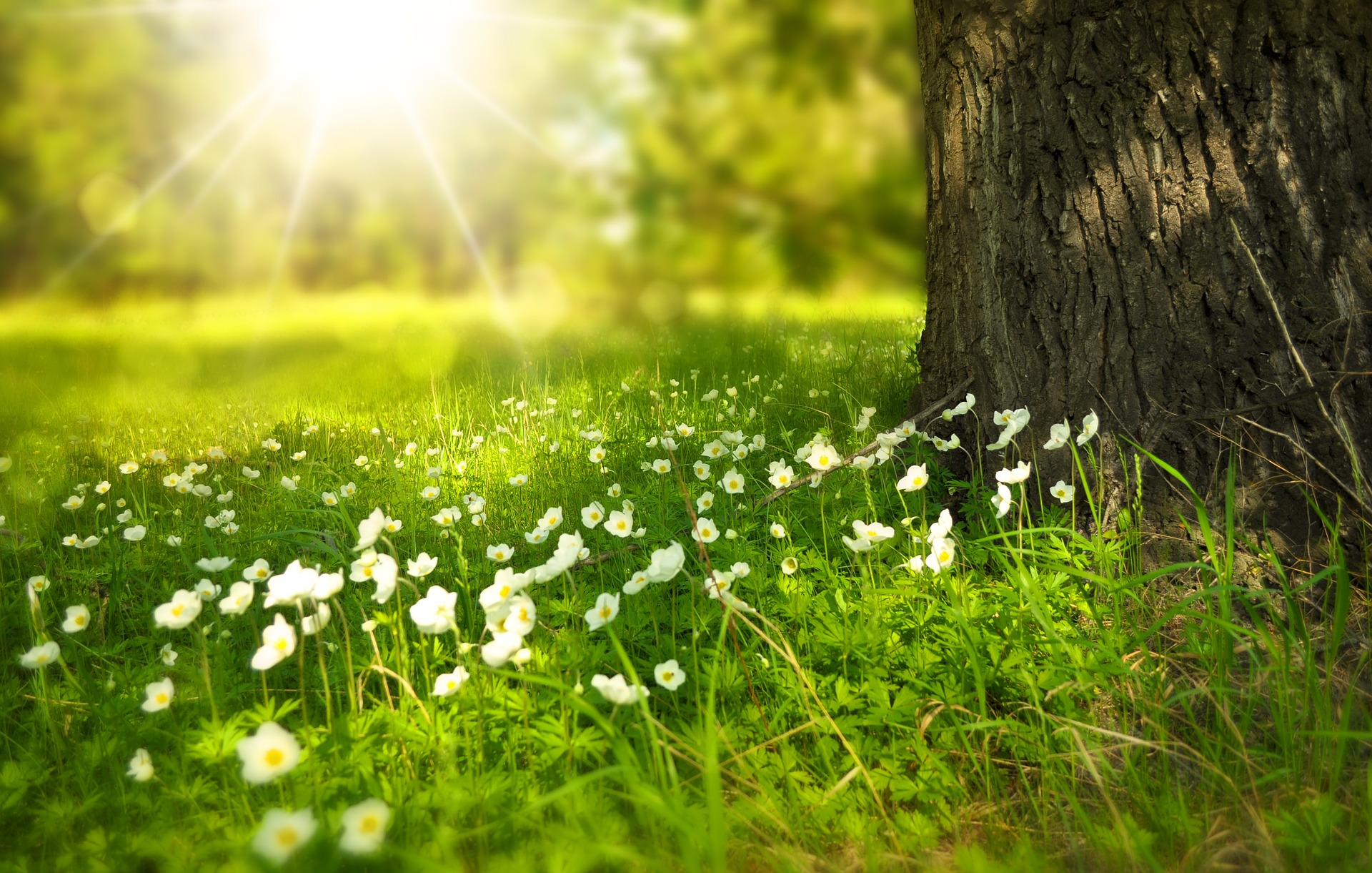 field with flowers and a tree to make the point about becoming more eco-friendly