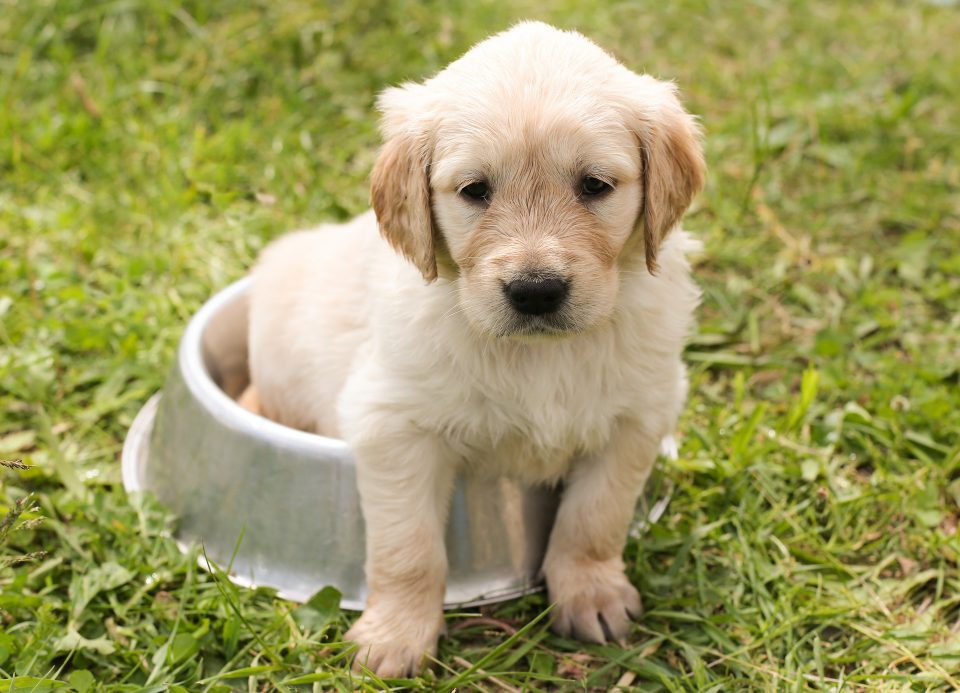 puppy sat in a bowl