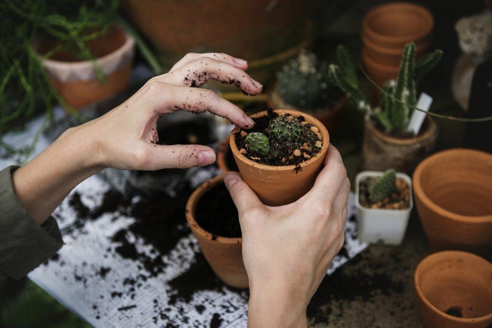 lady's hands planting a pot plant