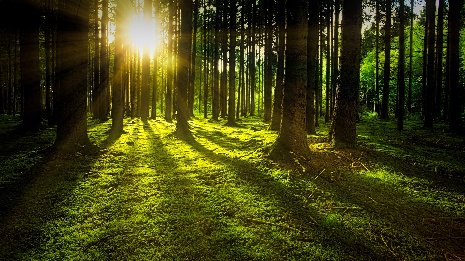 green grass and trees with the light shining through