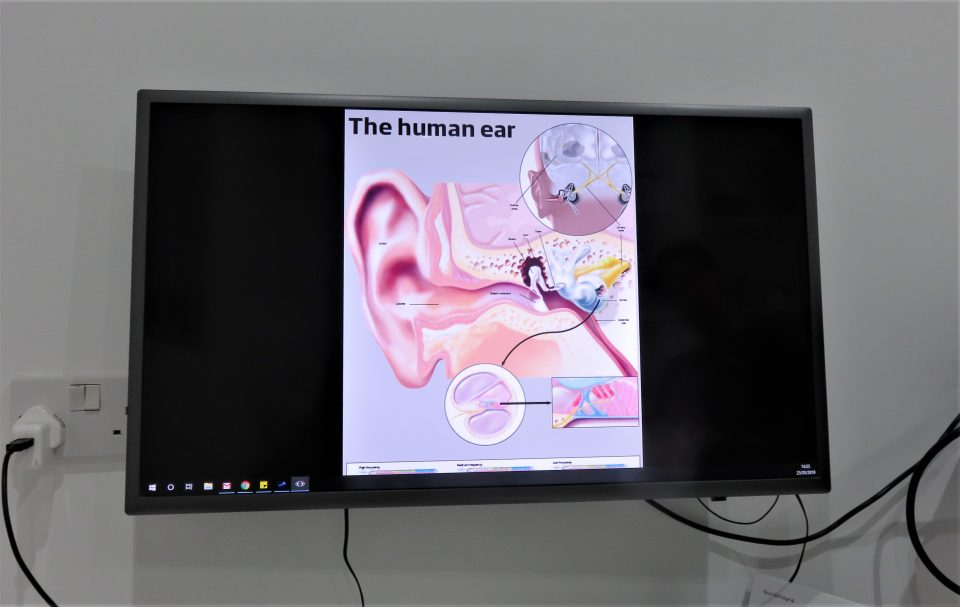 screen of the human ear