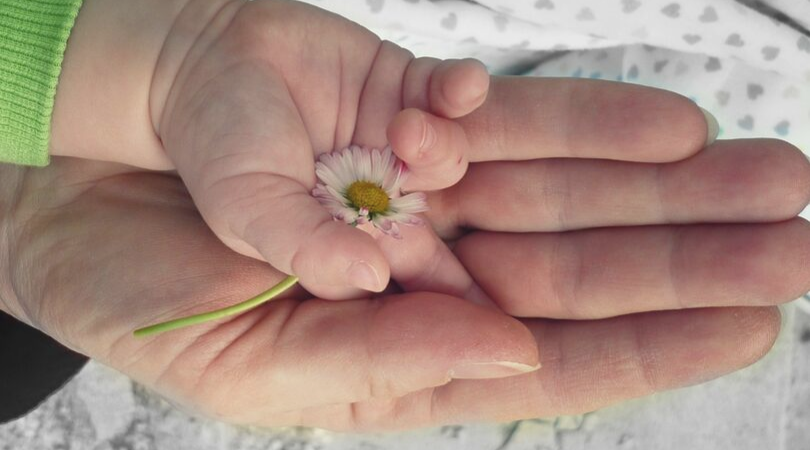 mum and baby hands holding a daisy
