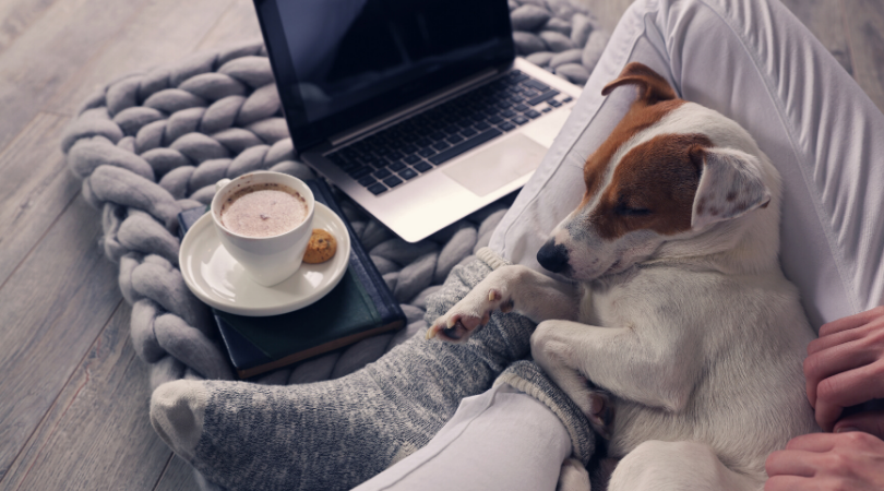 comfy clothes on legs with a dog asleep and a coffe and laptop