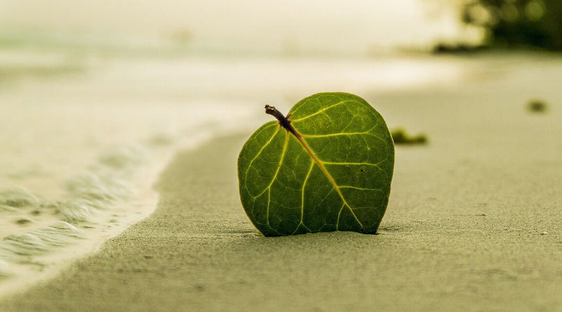 leaf in the sand on a beach