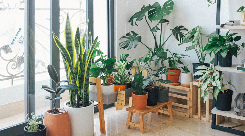 a large selection of air purifying plants in a home