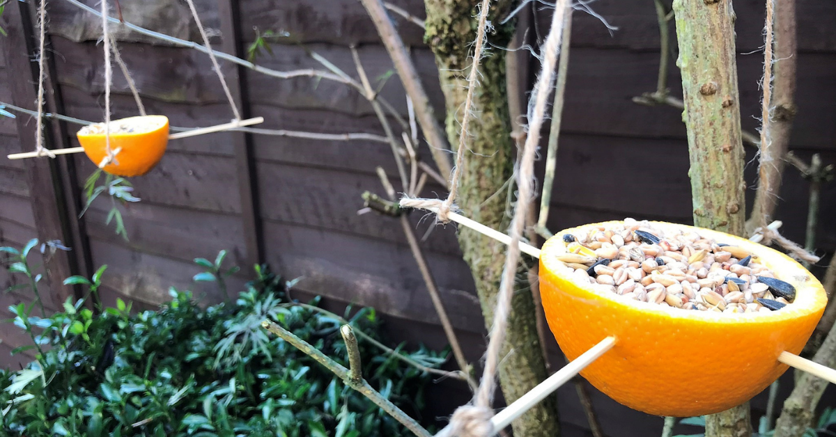 eco-friendly bird feeder