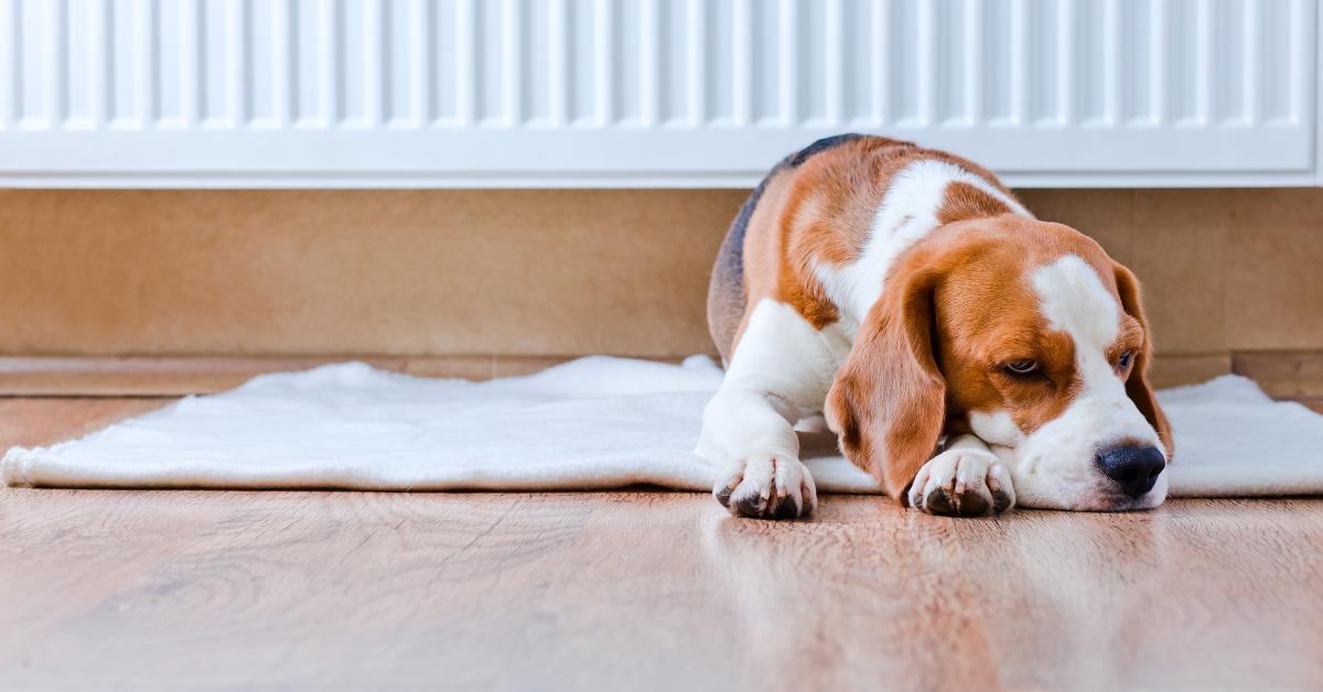 beagle dog laying by a radiator