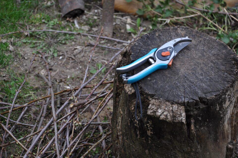 secateurs on a tree trunk