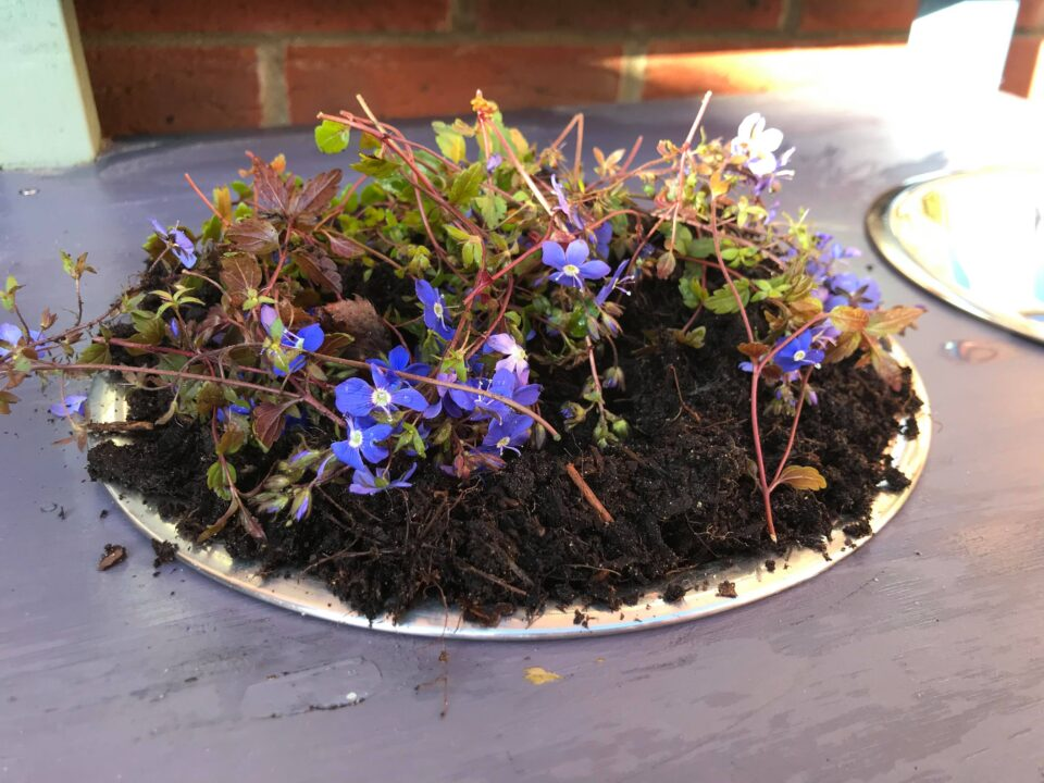 mud and flowers in a mud kitchen