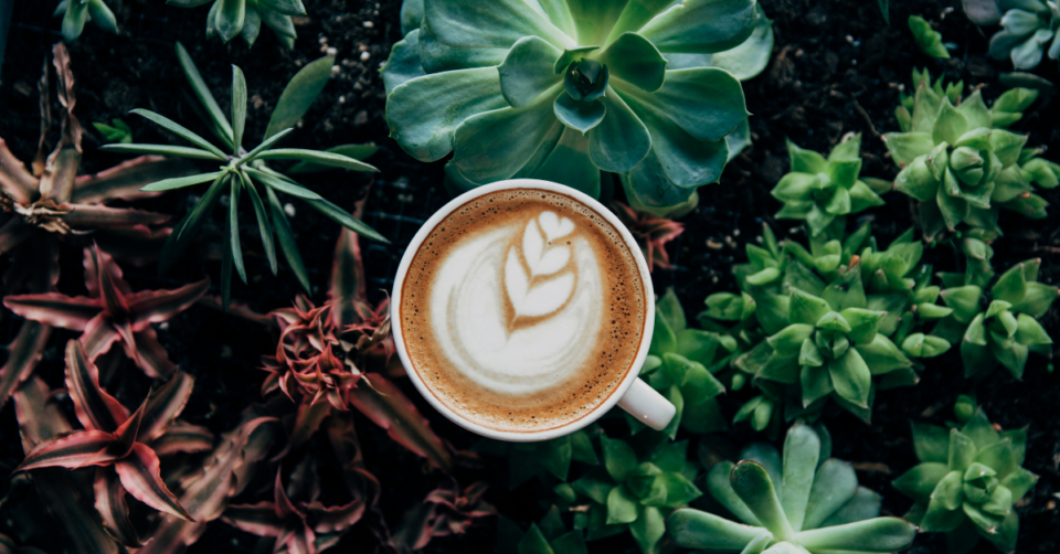cup of coffee amongst some green plants