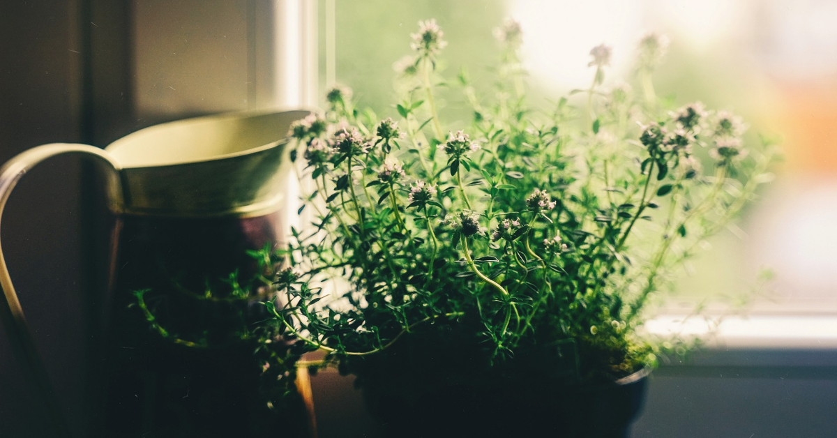 house plant and jug on a window sill