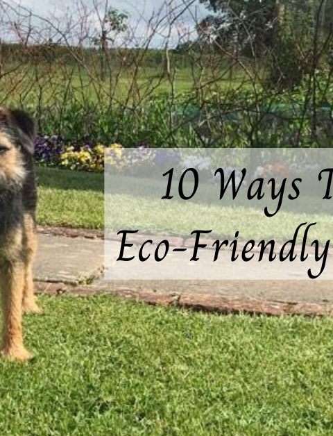 10 Ways To Be An Eco-Friendly Dog Owner