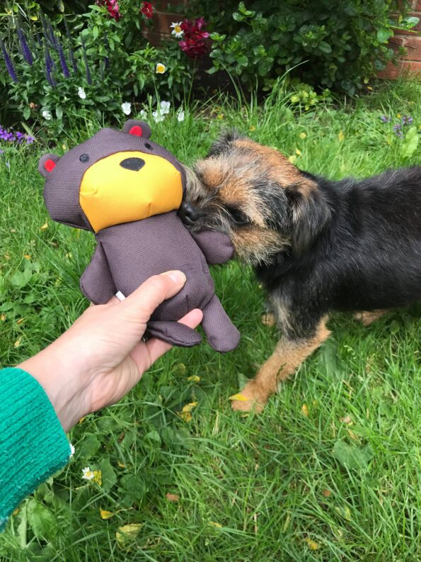 Tessa playing with her new eco-friendly dog toy which is a teddy