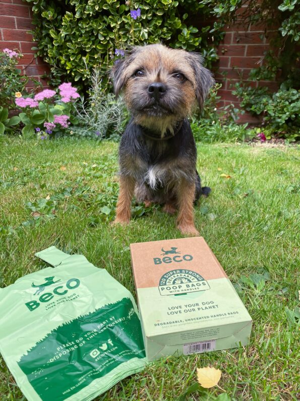 a border terrier who is black and tan sat behind a box of the eco poop bags