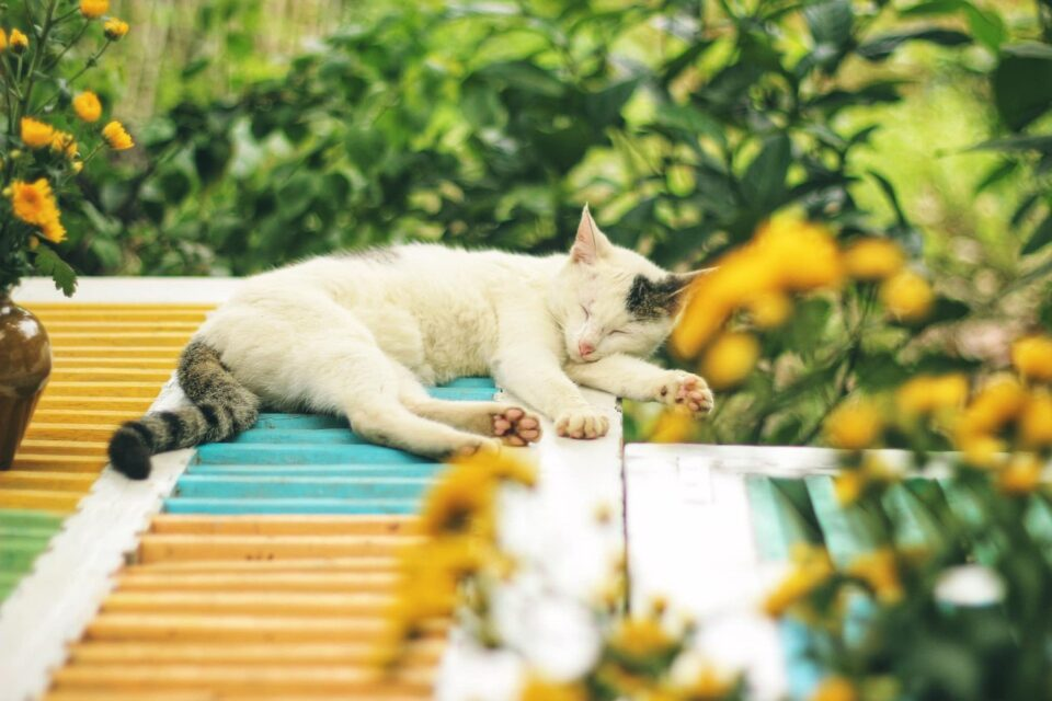 a ginger and white cat laying on a wooden slatted surface surrounded by flowers