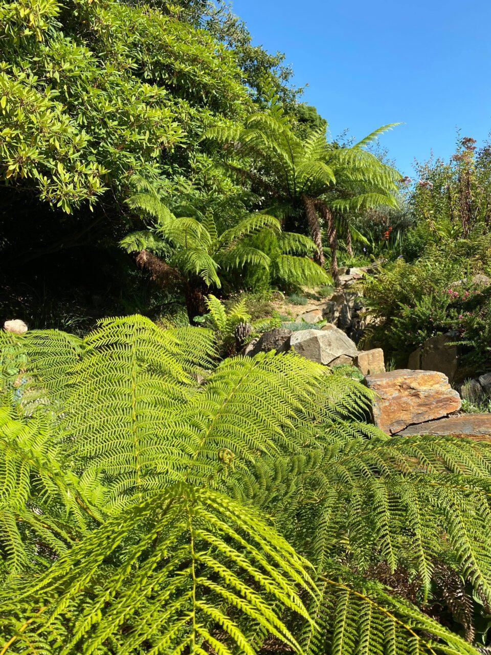 a large fern and rockery