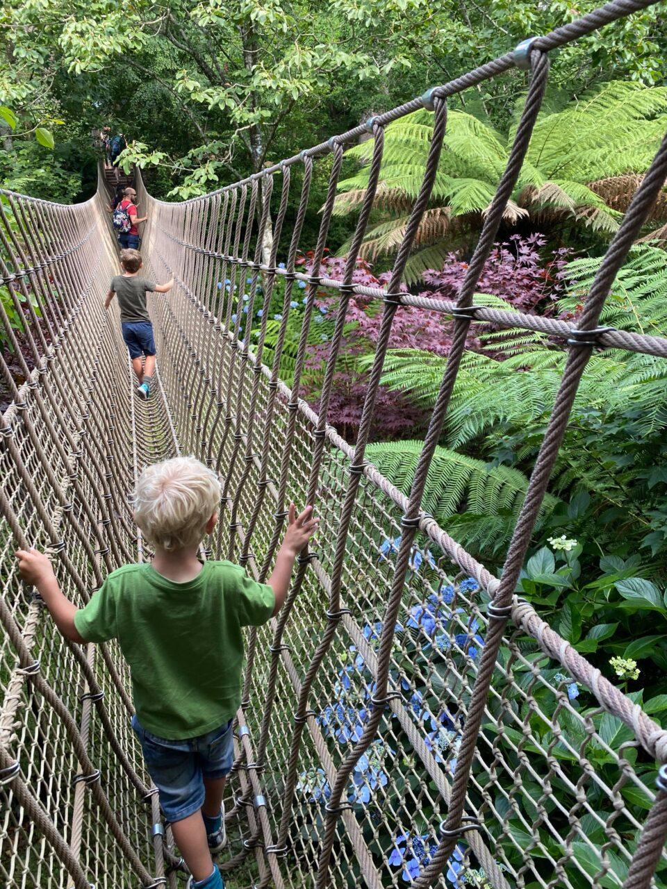 the kids on the jungle rope bridge
