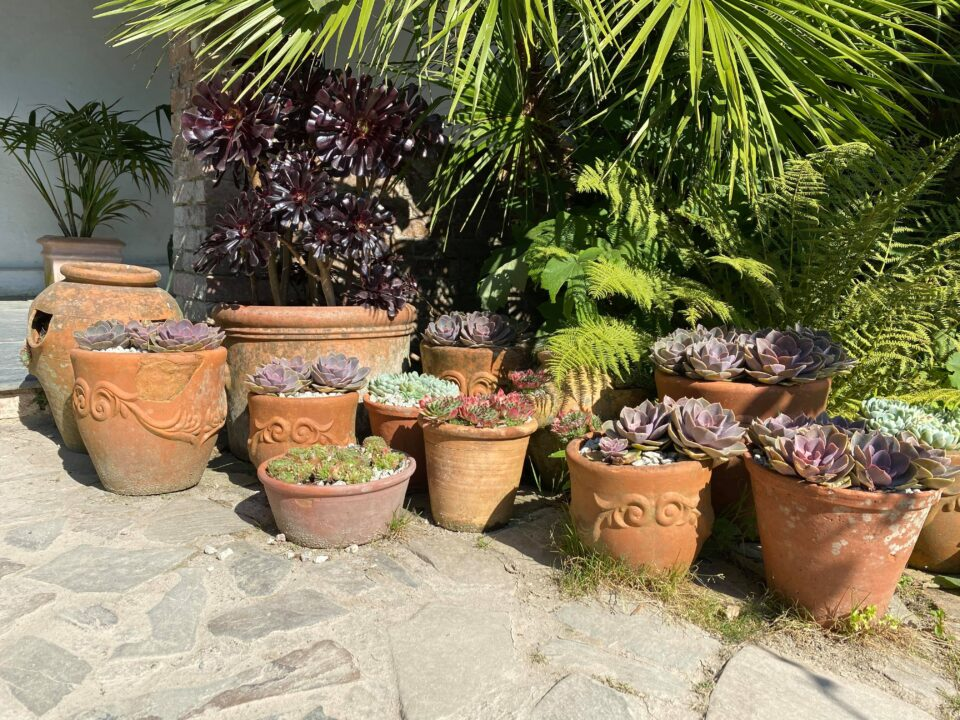 terracotta pots filled with succulents